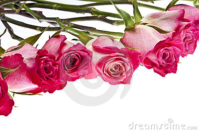 Beautiful Pink Rose Border Image with Copy Space