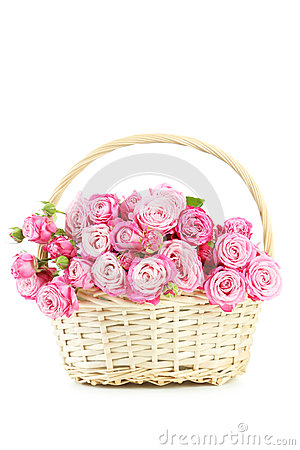 Free Beautiful Pink Roses Stock Photos - 55224643