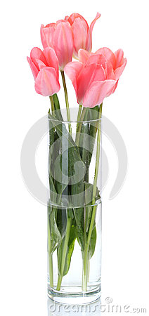 Free Beautiful Pink Tulips In Glass Vase Royalty Free Stock Image - 25829476