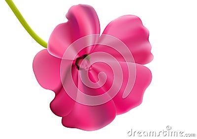 Beautiful pink vector flower