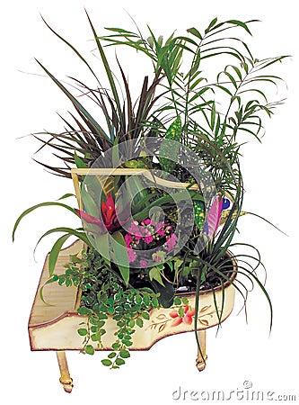 Beautiful plants arrangement