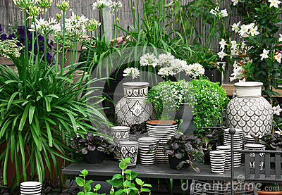 Beautiful plants and ceramics in a flower shop