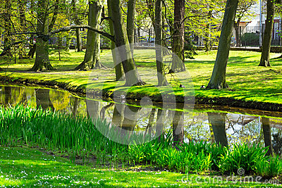 Beautiful pond in the park