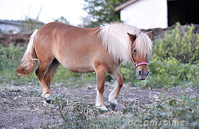 Beautiful pony
