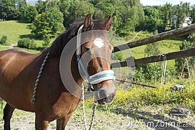 Beautiful pony portrait