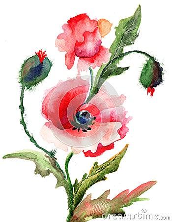 Beautiful Poppy flowers