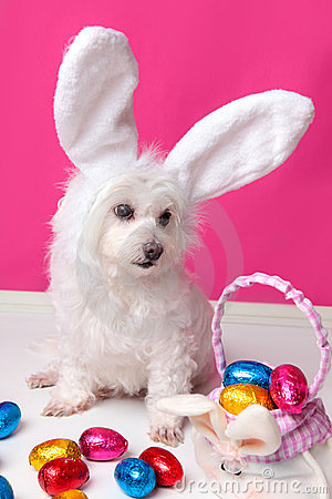 Beautiful puppy with bunny ears and easter eggs
