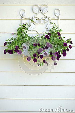 Beautiful purple blooms