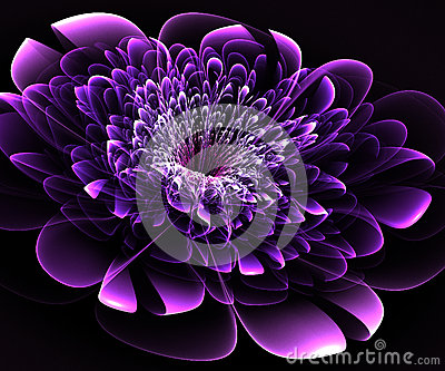 beautiful purple flower on black background. stock illustration, Beautiful flower
