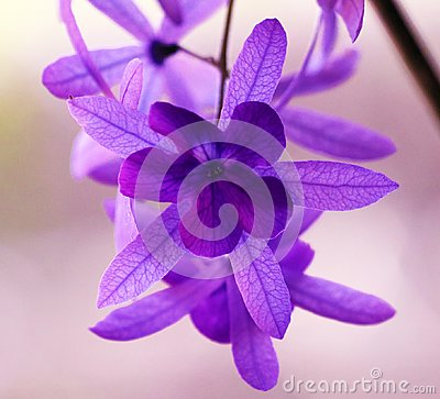 Free Beautiful Purple Violet Flower, Gorgeous Nature Stock Photos - 111980683