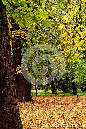 Beautiful quiet park at autumn