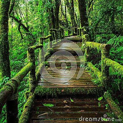 Free Beautiful Rain Forest At Ang Ka Nature Trail Royalty Free Stock Photography - 44947667