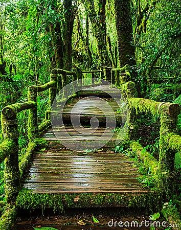 Free Beautiful Rain Forest At Ang Ka Nature Trail Stock Image - 44947671