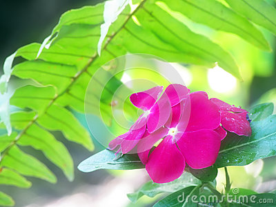 summer rainforest periwinkle flower background