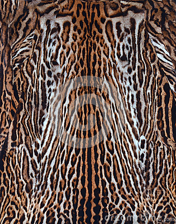 Real skin of leopard