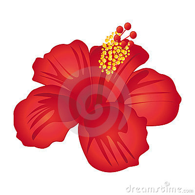 Beautiful red hibiscus flower.