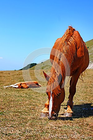Beautiful red horses taken in Italian mountains