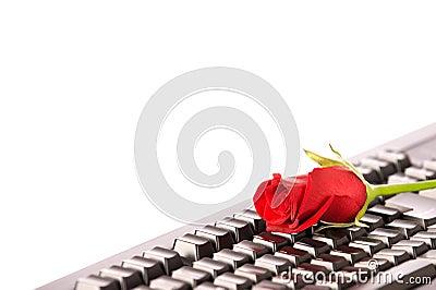 Beautiful red rose on black keyboard