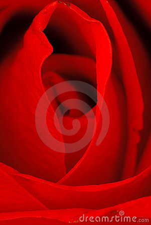 Free Beautiful Red Rose. Macro Shot. Royalty Free Stock Photography - 10286567