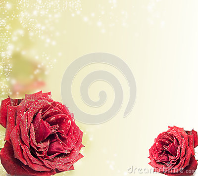Beautiful red rose on magical background