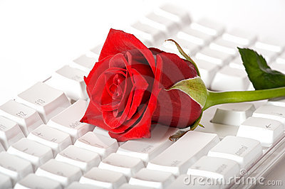 Beautiful red rose on white keyboard