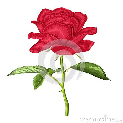 Free Beautiful Red Rose With Long Stem And Leaves With The Effect Of A Watercolor Drawing Isolated On White Stock Image - 42295061