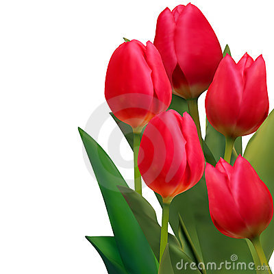 Beautiful red tulips card template. EPS 8