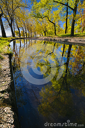 Free Beautiful Reflection Of Trees In A Puddle In A City Park In The Early Morning II Royalty Free Stock Image - 95787386