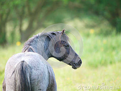 Beautiful Roan Pony