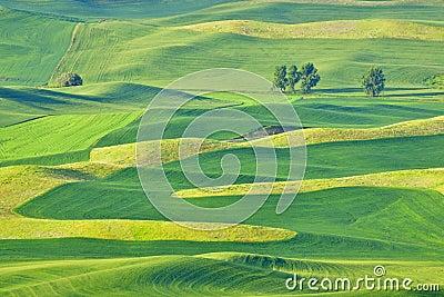 Beautiful rolling hills in the Palouse, Washington