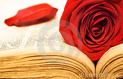 Beautiful rose on book