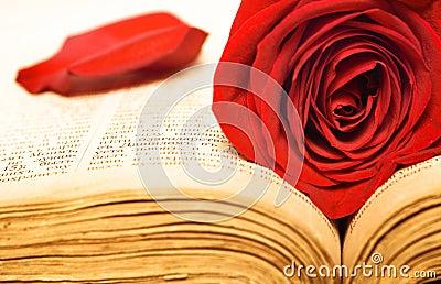 Beautiful rose on book