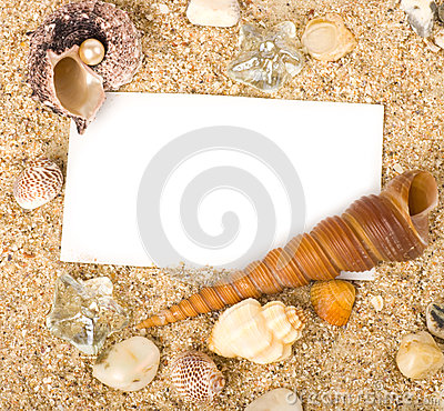 Beautiful sand with exotic shell