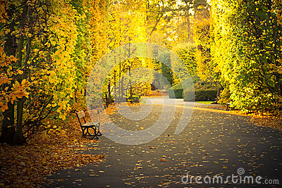 Beautiful scenery in autumnal yellow park