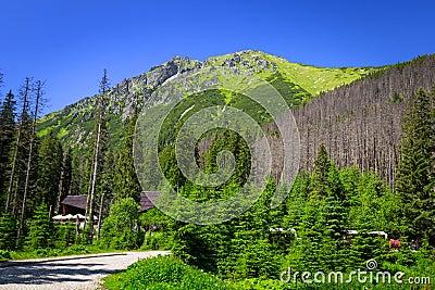 Beautiful scenery of Tatra mountain