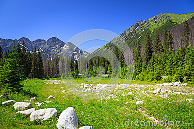 Beautiful scenery of Wlosienica meadow in Tatra mountain
