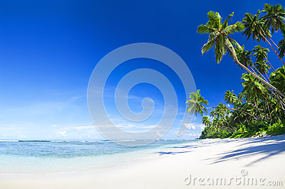 Beautiful scenic beach with Palm Tree