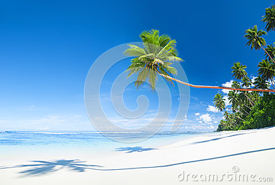 Beautiful Scenic Beach with Palm Tree