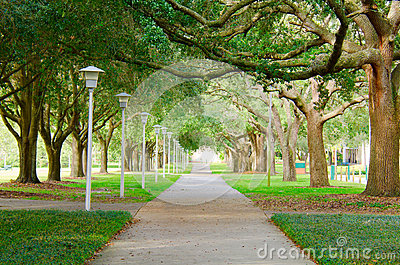 Beautiful shaded sidewalk with a lush green tree canopy