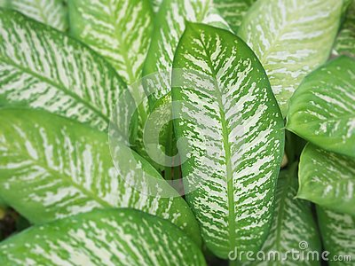 The beautiful shape and pattern leaves Stock Photo