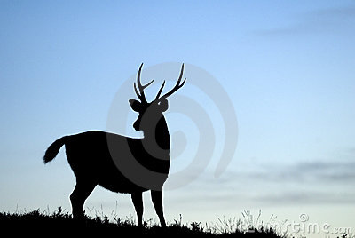 Beautiful Silhouette od Taiwan Sambar Deer