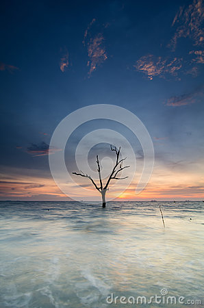 Free Beautiful Silhouette Of Lonely Mangrove Tree Over Sunset And Low Tide Water Royalty Free Stock Photo - 79649105