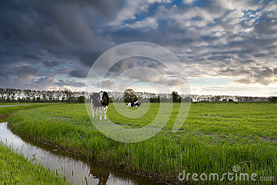 Beautiful sky over pasture with cattle