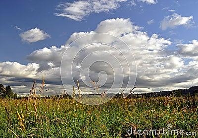 Beautiful Sky and Wheat Field