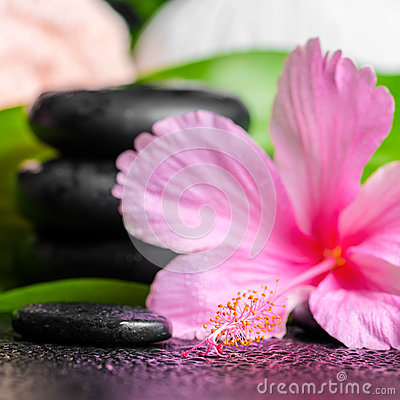 Beautiful spa background of pink hibiscus flower, leaves, towel Stock Photo