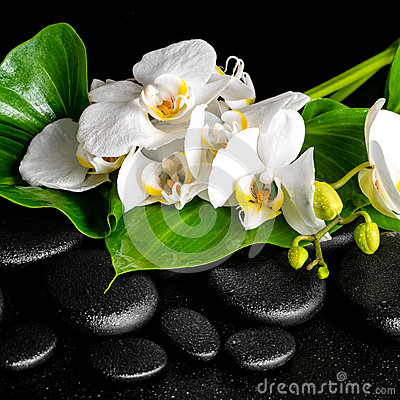 Free Beautiful Spa Concept Of Blooming White Orchid Flower Royalty Free Stock Images - 54311389