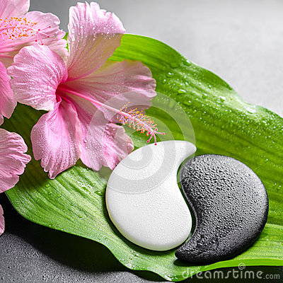 Beautiful spa concept of pink hibiscus flowers and Yin-Yang of s Stock Photo