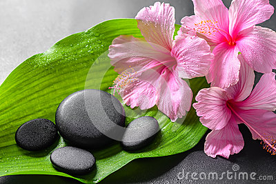 Beautiful spa concept of pink hibiscus flowers and zen basalt st Stock Photo