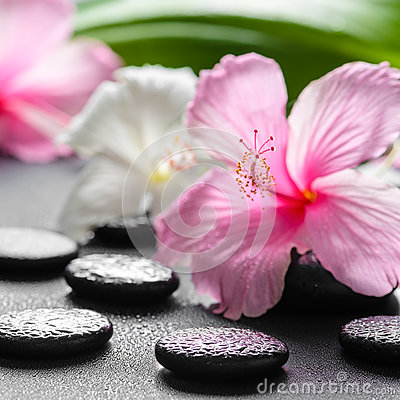 Beautiful spa concept of pink and white hibiscus flowers, leaf Stock Photo