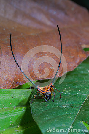 Free Beautiful Spider Long Horn On The Leaf Royalty Free Stock Photography - 98409747